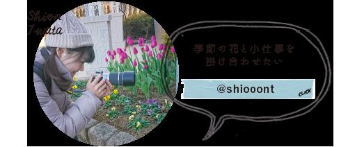 Shion Iwata